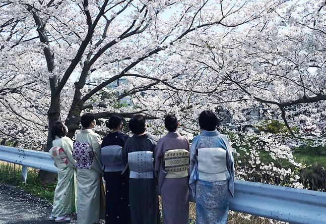近くの桜並木と着物の組み合わせが最高です!